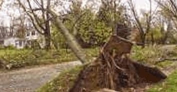 tree falls on fence wood close by LaPlata